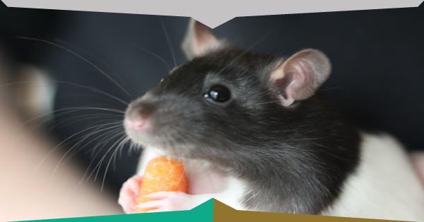 come eliminare i topi in casa azioni preliminari