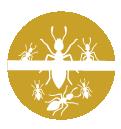 icona3hover trattamento formiche napoli e provincia