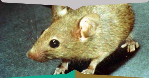 Come eliminare i topi dal giardino | Fai da Te Mania