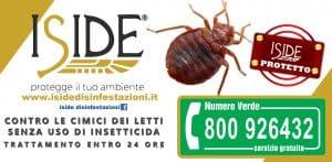 ISIDE-CIMICE-JPG-disinfestzione-300x147 ISIDE-CIMICE-JPG-disinfestzione