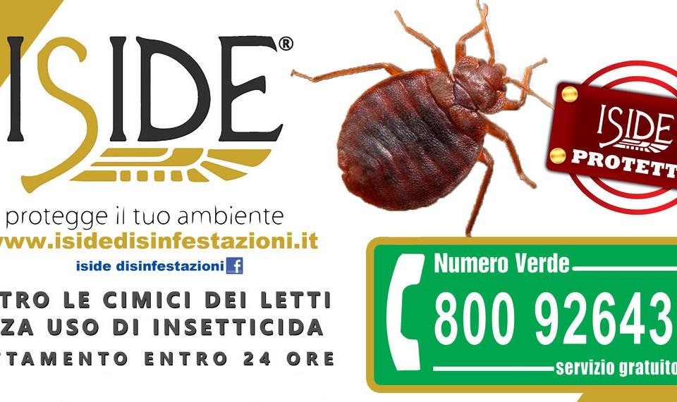 iside-cimice-disinfestazione_ottimizzata