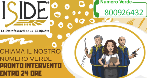 BANNER-PRONTO-INTERVENTO-IN-24-ORE1-300x160 BANNER PRONTO INTERVENTO IN 24 ORE